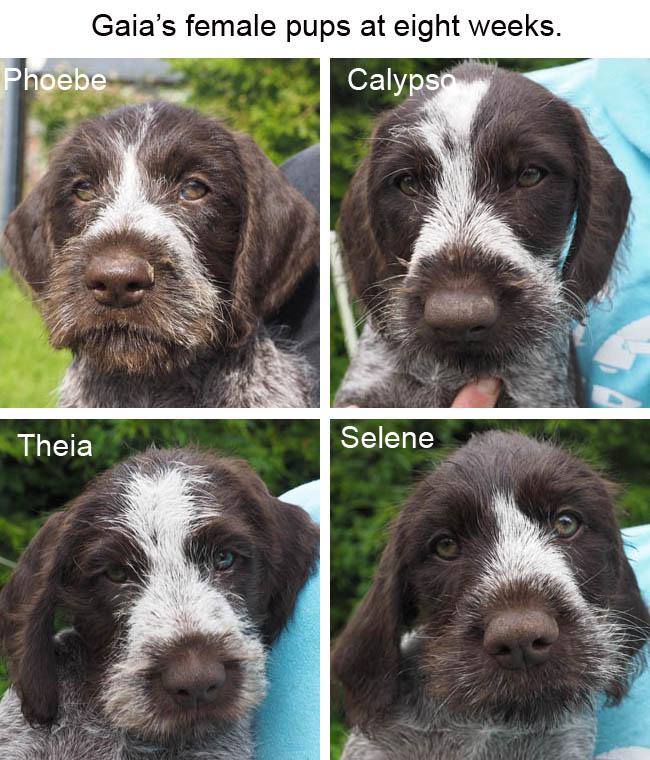 Gaias female pups at eight weeks BLOG