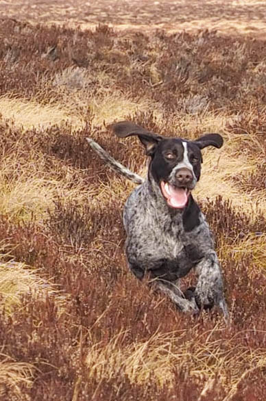 Pontus loving the run on the spring moor.