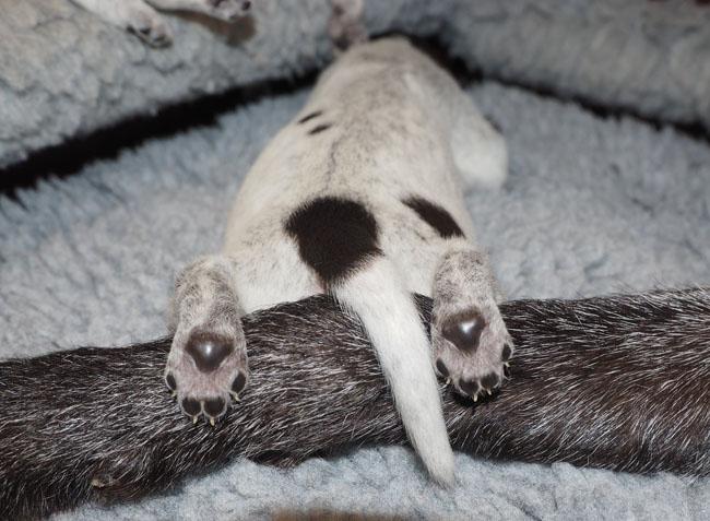 Titan asleep across Gaia's front leg.