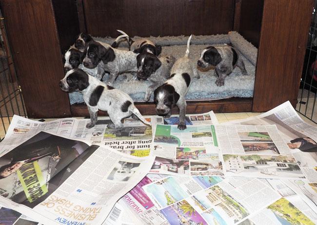 Pups entering the newspaper garden.