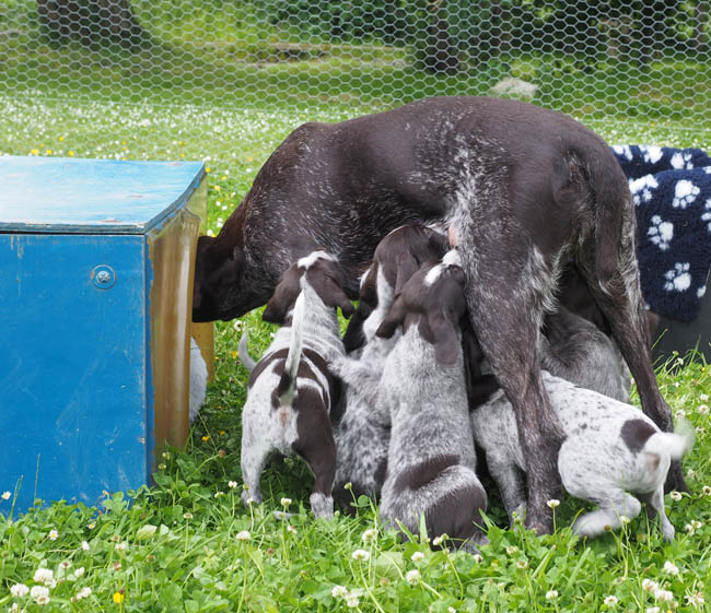 Gaia checking the pups outdoor lamb house.