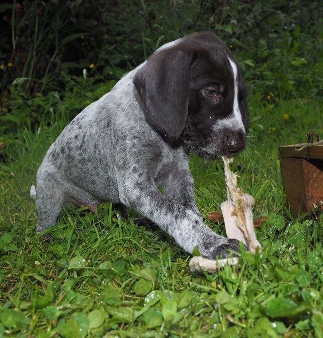 Pontus very impressed with the taste of tripe.