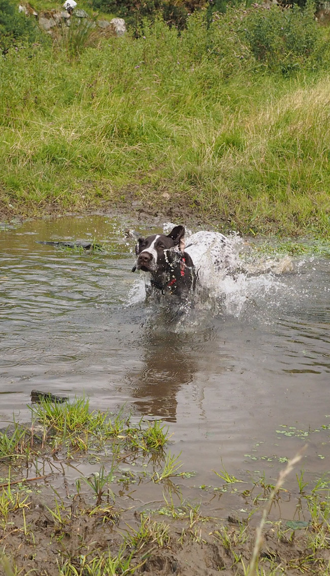 Splashing though the little shallow stream.