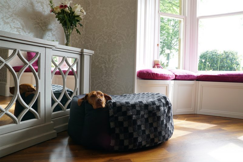Dog Resting in Nest Dog Bed - Do Not Disturb!
