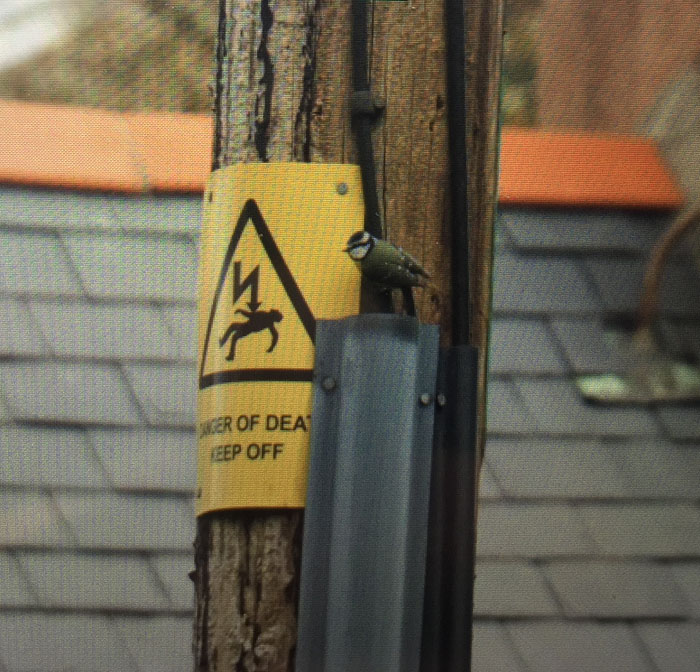 Charming sign of DEATH beside the tit's nest.