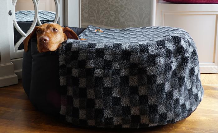 Vizslas and other shivery dogs love a nest sock.