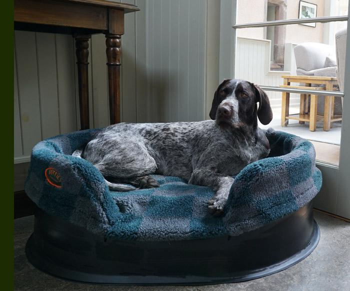Pontus in his Raised bed.