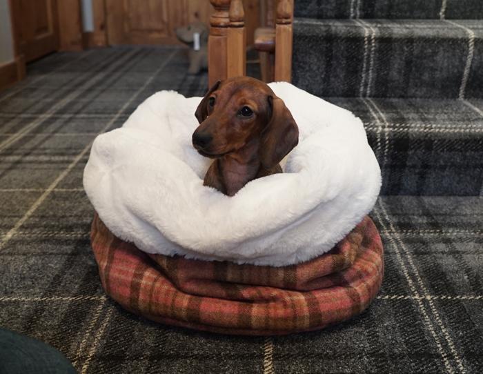 Mini Dachound in Mini Wolf Den.