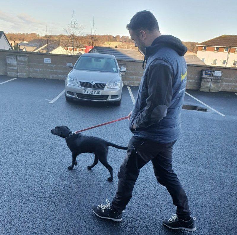 Black Labrador Dexter on a Lead Outside
