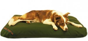 Dog laid on green Durasoft Tuffies mattress dog bed