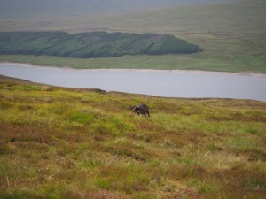 Gaia running up the hill on the moor
