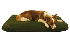 An olive Durasoft mattress with a Collie dog.