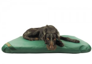 gaia-on-a-waterproof-dog-bed