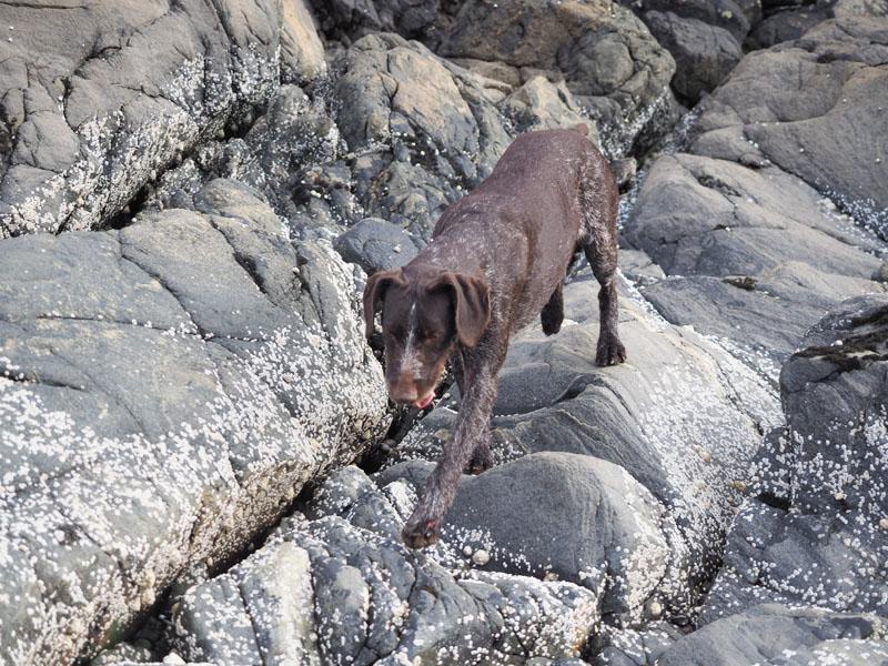 Running on the rocks....