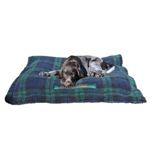 German Wirehaired puppy in puppy dog bed copy