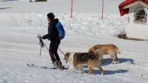 A person skiing with her dogs in the Dolomites, Italy