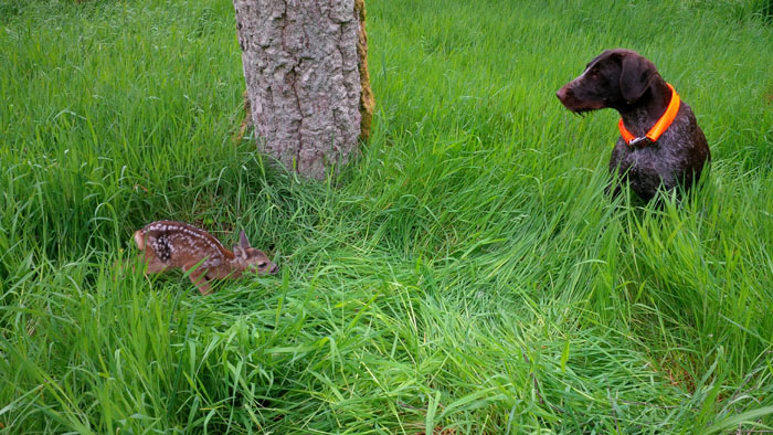 Gaia accidentally came across this newborn fawn.