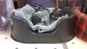 Tippex the GWP in a Raised bed prototype