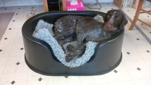 Gaia happy in a Raised dog bed prototype