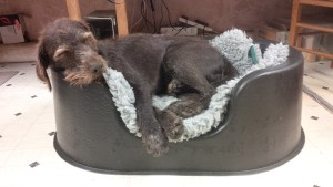 Gollum, GWP, also using a medium Raised bed