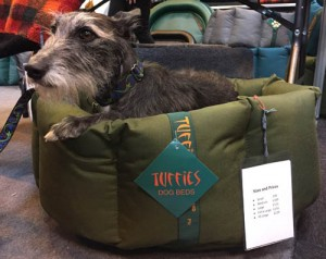 Beautiful lurcher trying out a nest dog bed at Crufts
