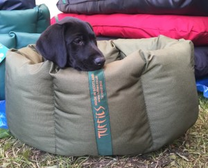 Labrador puppy testing out a Small Tuffies Nest.