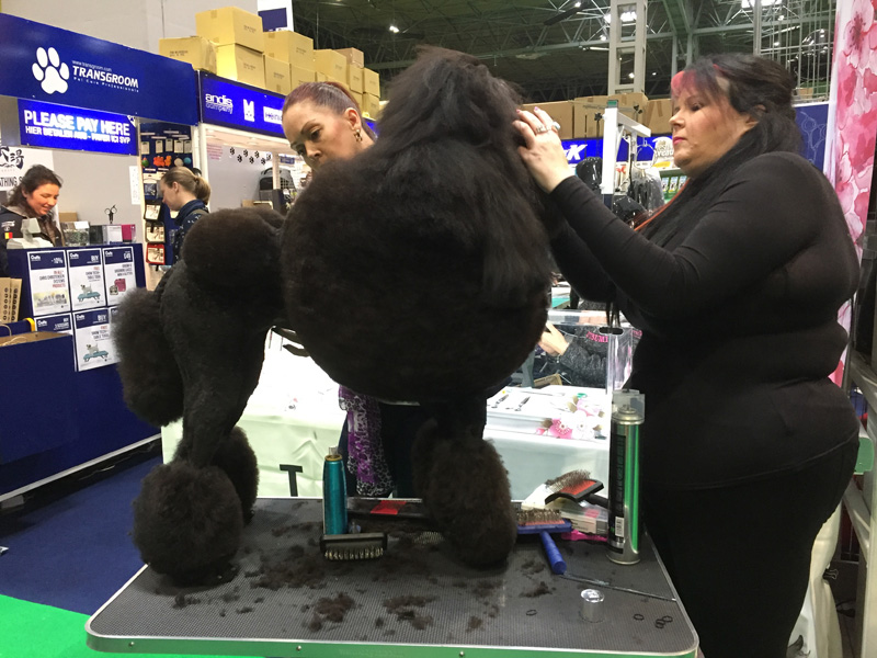 Poodle clipping.