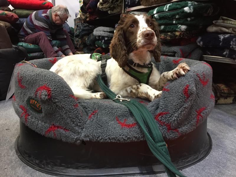 Spaniel in a medium Raised Tuffies bed.