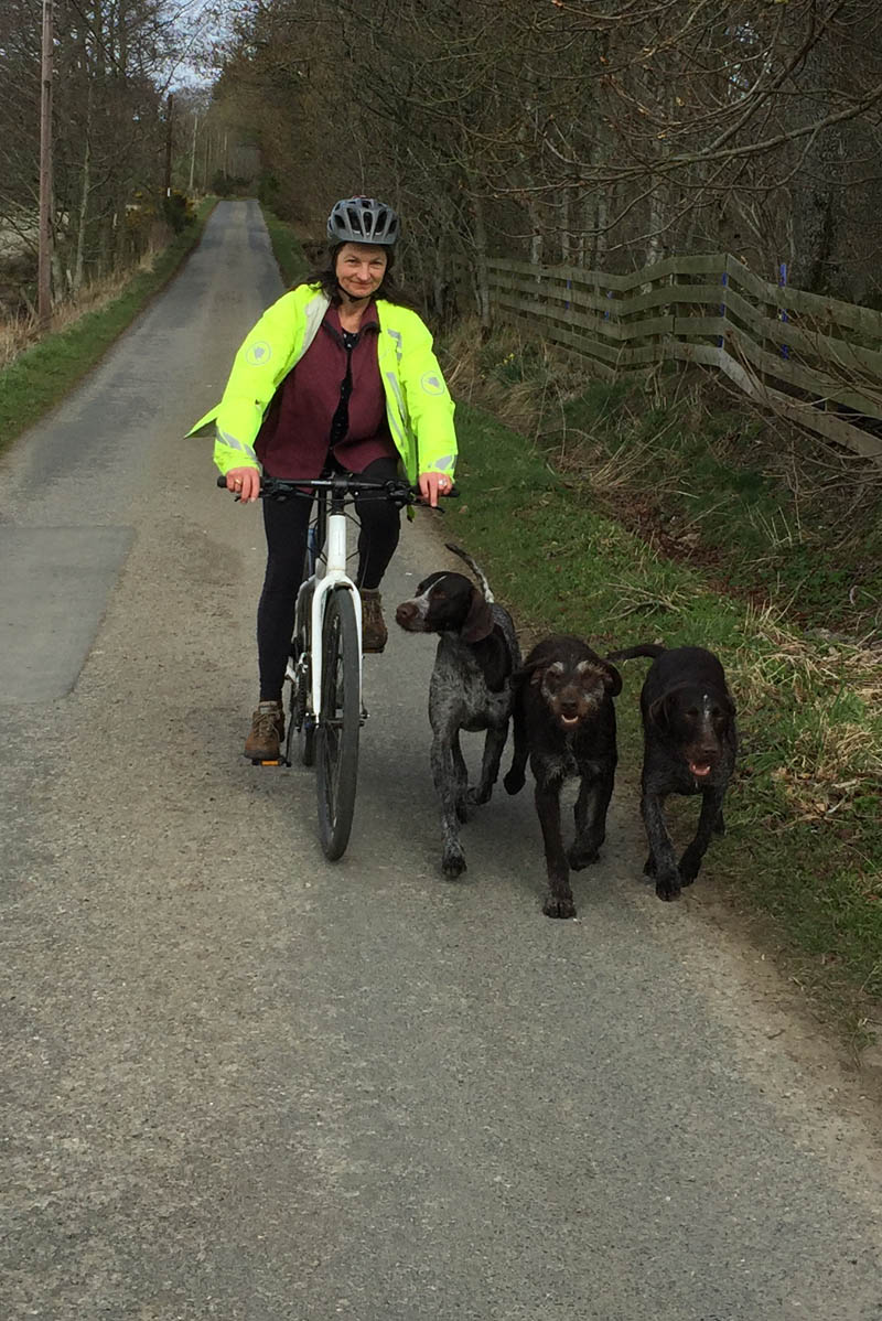 Exercising dogs by letting them run with the push bike.