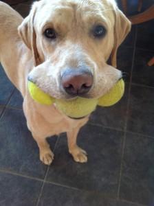 Max can pick up three balls
