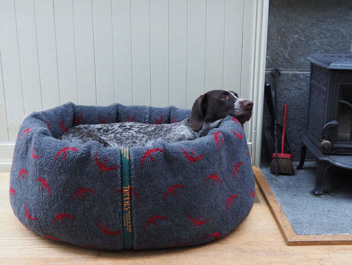 Pontus in a Tuffies nest with full cover.