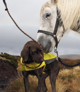Pony and dog contact.