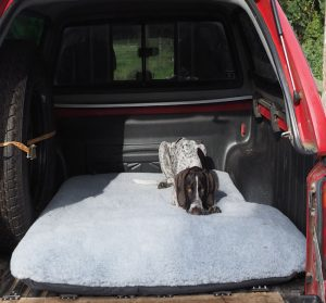 Bespoke dog bed for rear of pick up truck