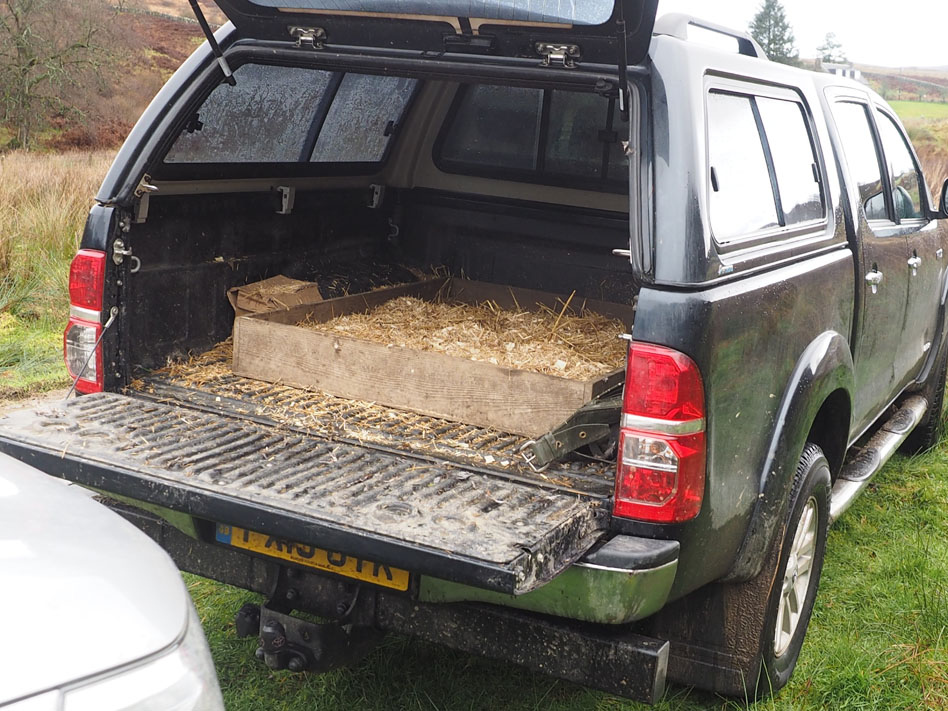 Bed with straw in the back of pick-up.