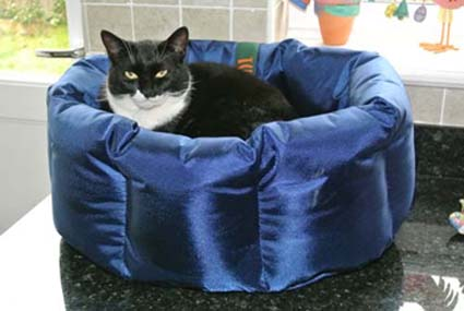 Cat in charge of dog bed...