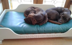 Paula Ford's dogs in waterproof mattress bed