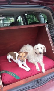 Philippa Hughes' dogs in the bespoke dog bed in her car.
