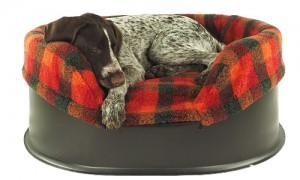 pontus-in-raised-dog-bed