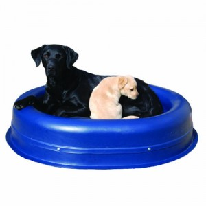Freia and Tilly in a Really Tough Tuffie chew proof bed