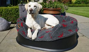 A raised bed sitting outside with a Labrador in it.
