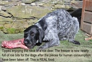 Tippex, GWP, eating raw roe deer meat