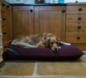 Waterproof dog bed with wicking cover.