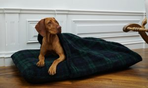 Tunnel cover on a 110x68 size bed with a Vizsla snuggling in.