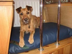 Little terrier on bespoke bed