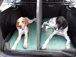 Bespoke waterproof dog beds in a car cage.