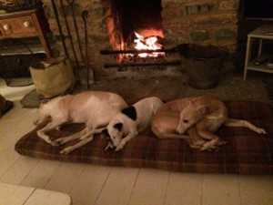 Three dogs on their Tuffie by the fire