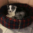 Buy Luxury Dog Beds Uk Online British Handmade Heavy