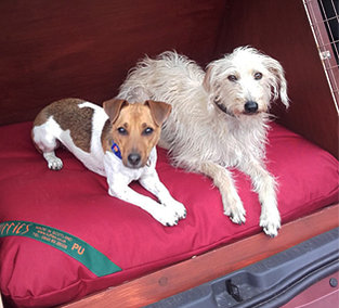 Luxury Dog Beds, Mattresses & Liners | Tuffies