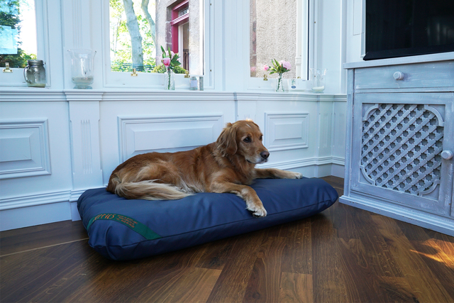 The Wipe Clean Mattress Dog Bed