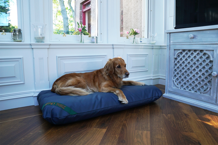 The Wipe Clean Mattress Dog Bed Thumbnail